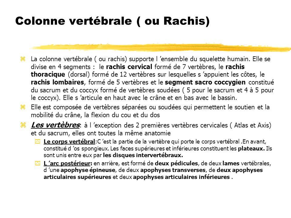 Colonne vertébrale ( ou Rachis) zLa colonne vertébrale ( ou rachis) supporte l ensemble du squelette humain. Elle se divise en 4 segments : le rachis