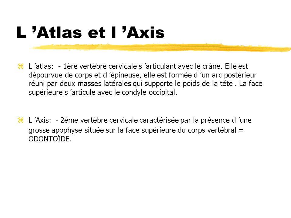 L Atlas et l Axis zL atlas: - 1ère vertèbre cervicale s articulant avec le crâne. Elle est dépourvue de corps et d épineuse, elle est formée d un arc