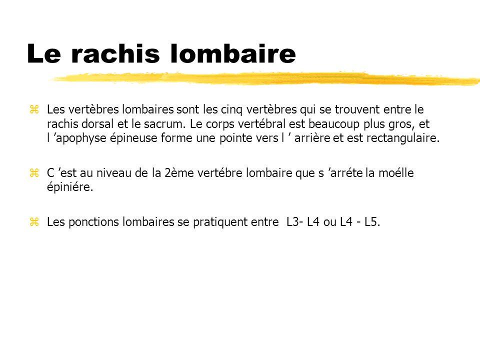 Le rachis lombaire zLes vertèbres lombaires sont les cinq vertèbres qui se trouvent entre le rachis dorsal et le sacrum. Le corps vertébral est beauco