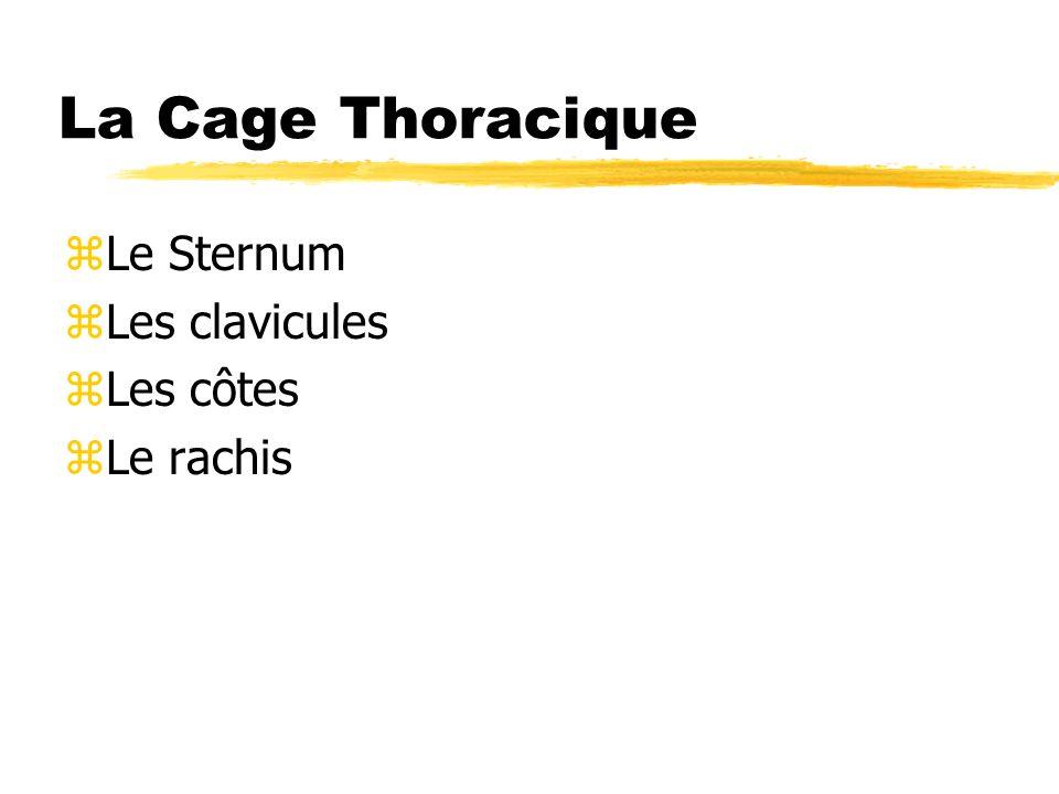 La Cage Thoracique zLe Sternum zLes clavicules zLes côtes zLe rachis