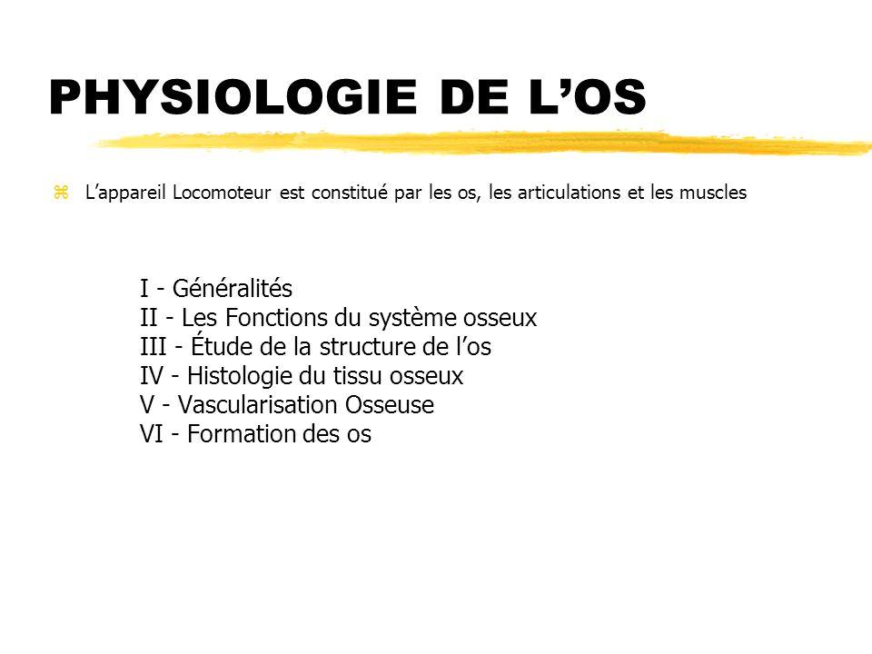 PHYSIOLOGIE DE LOS zLappareil Locomoteur est constitué par les os, les articulations et les muscles I - Généralités II - Les Fonctions du système osse