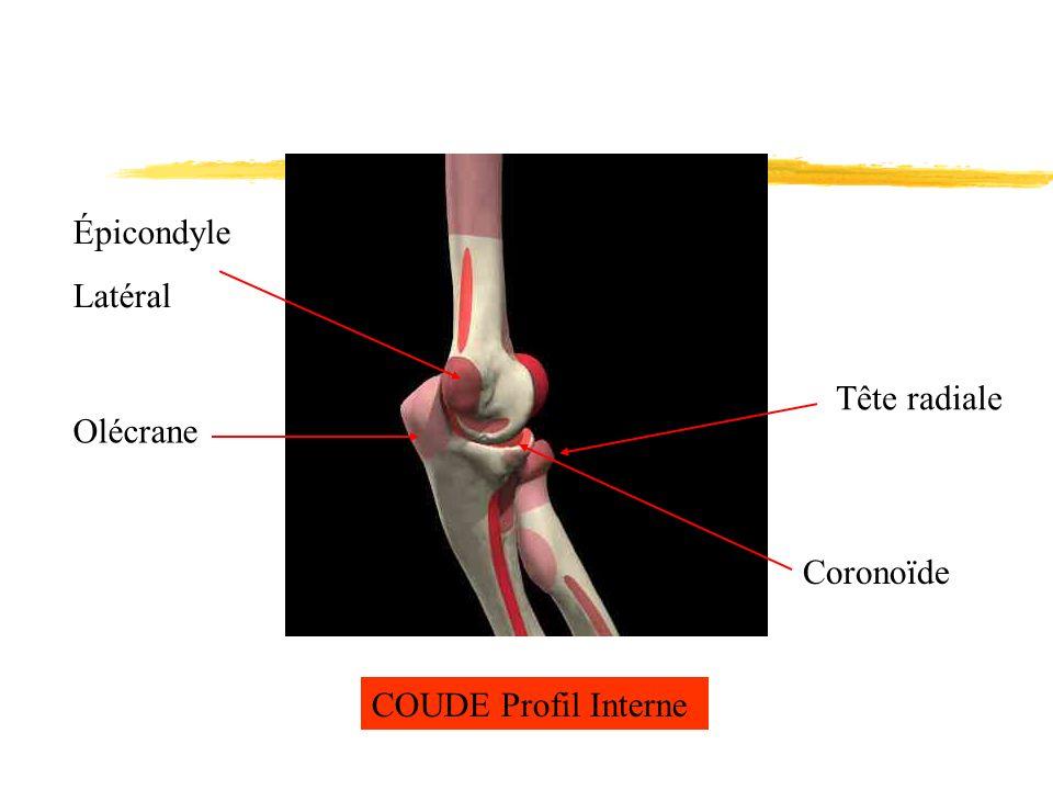 COUDE Profil Interne Tête radiale Coronoïde Olécrane Épicondyle Latéral