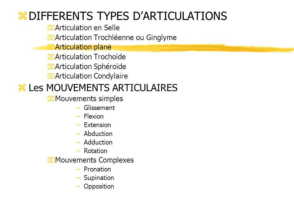zDIFFERENTS TYPES DARTICULATIONS xArticulation en Selle xArticulation Trochléenne ou Ginglyme xArticulation plane xArticulation Trochoïde xArticulatio