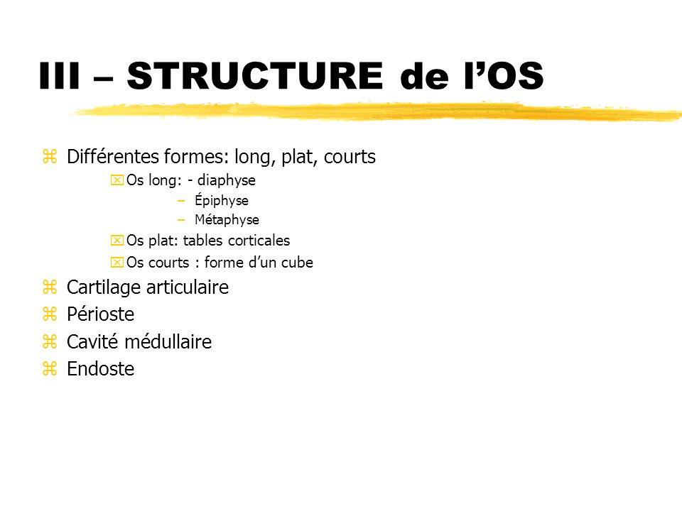 III – STRUCTURE de lOS zDifférentes formes: long, plat, courts xOs long: - diaphyse –Épiphyse –Métaphyse xOs plat: tables corticales xOs courts : form