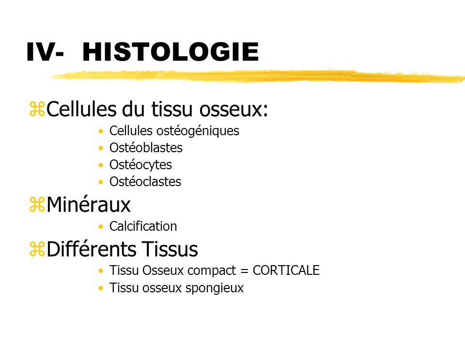 IV- HISTOLOGIE zCellules du tissu osseux: Cellules ostéogéniques Ostéoblastes Ostéocytes Ostéoclastes zMinéraux Calcification zDifférents Tissus Tissu