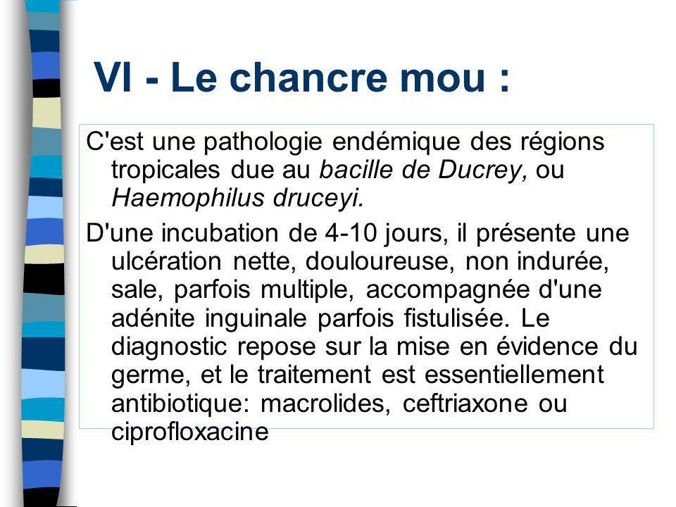 VI - Le chancre mou : C'est une pathologie endémique des régions tropicales due au bacille de Ducrey, ou Haemophilus druceyi. D'une incubation de 4-10