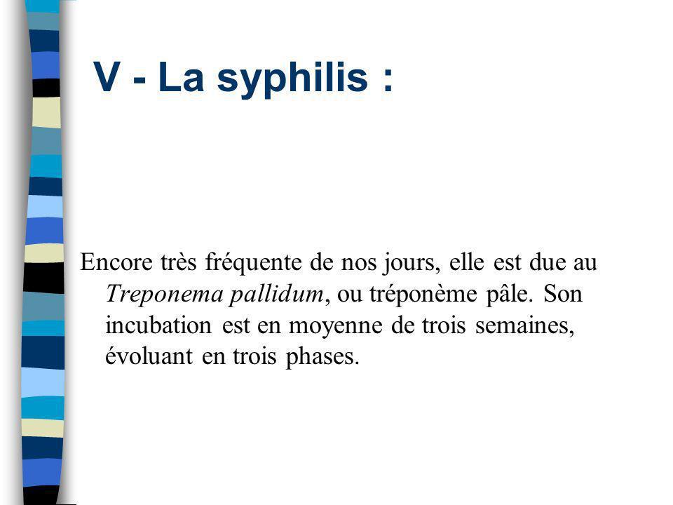 V - La syphilis : Encore très fréquente de nos jours, elle est due au Treponema pallidum, ou tréponème pâle. Son incubation est en moyenne de trois se
