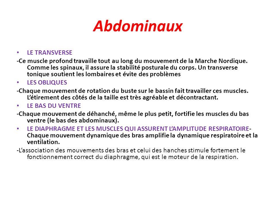 Abdominaux LE TRANSVERSE -Ce muscle profond travaille tout au long du mouvement de la Marche Nordique. Comme les spinaux, il assure la stabilité postu
