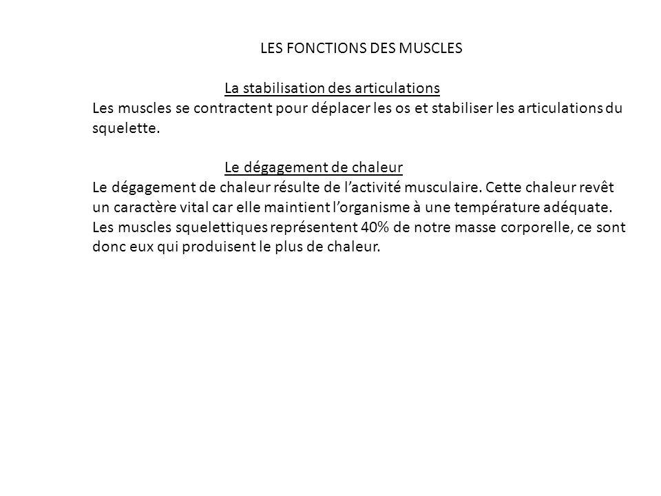 LES FONCTIONS DES MUSCLES La stabilisation des articulations Les muscles se contractent pour déplacer les os et stabiliser les articulations du squele