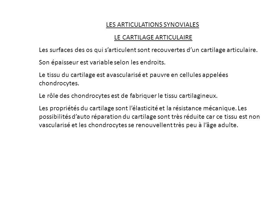 LES ARTICULATIONS SYNOVIALES LE CARTILAGE ARTICULAIRE Les surfaces des os qui sarticulent sont recouvertes dun cartilage articulaire. Son épaisseur es