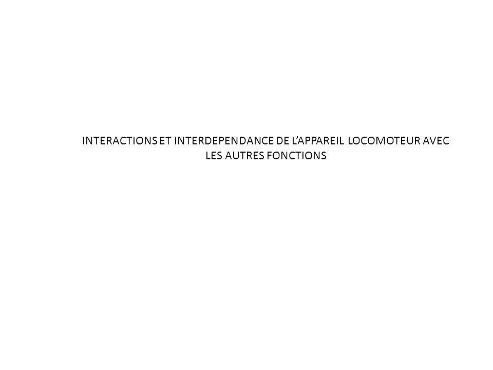 INTERACTIONS ET INTERDEPENDANCE DE LAPPAREIL LOCOMOTEUR AVEC LES AUTRES FONCTIONS