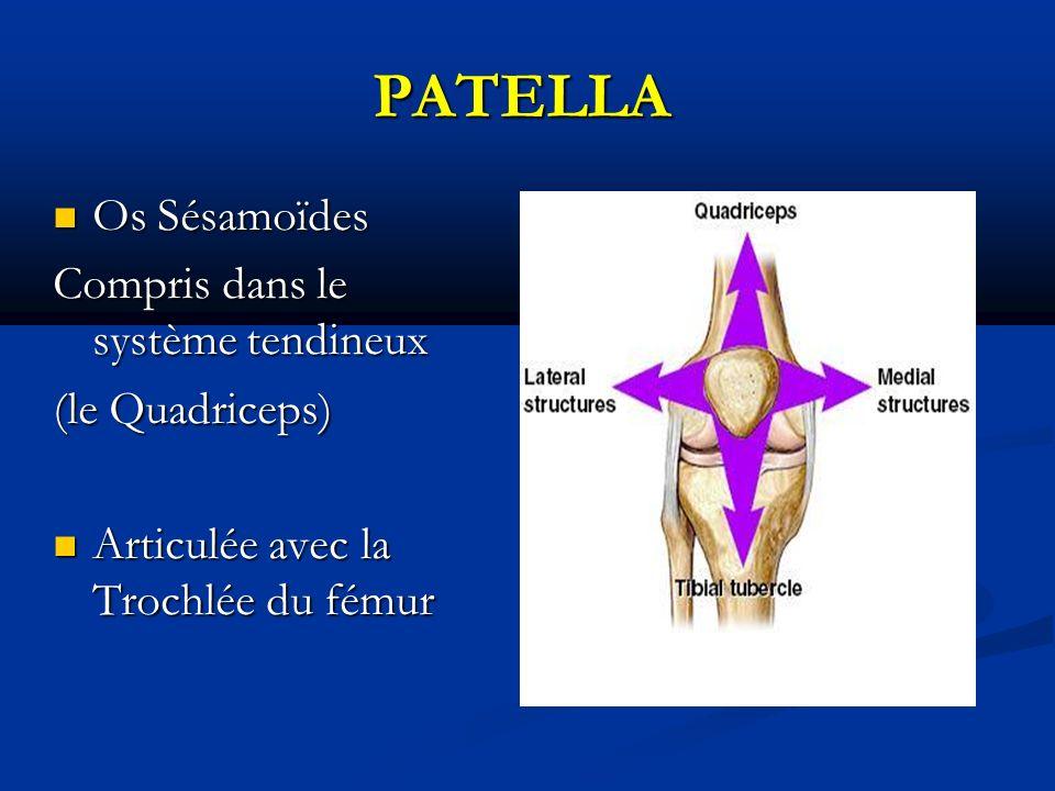PATELLA Os Sésamoïdes Os Sésamoïdes Compris dans le système tendineux (le Quadriceps) (le Quadriceps) Articulée avec la Trochlée du fémur Articulée avec la Trochlée du fémur