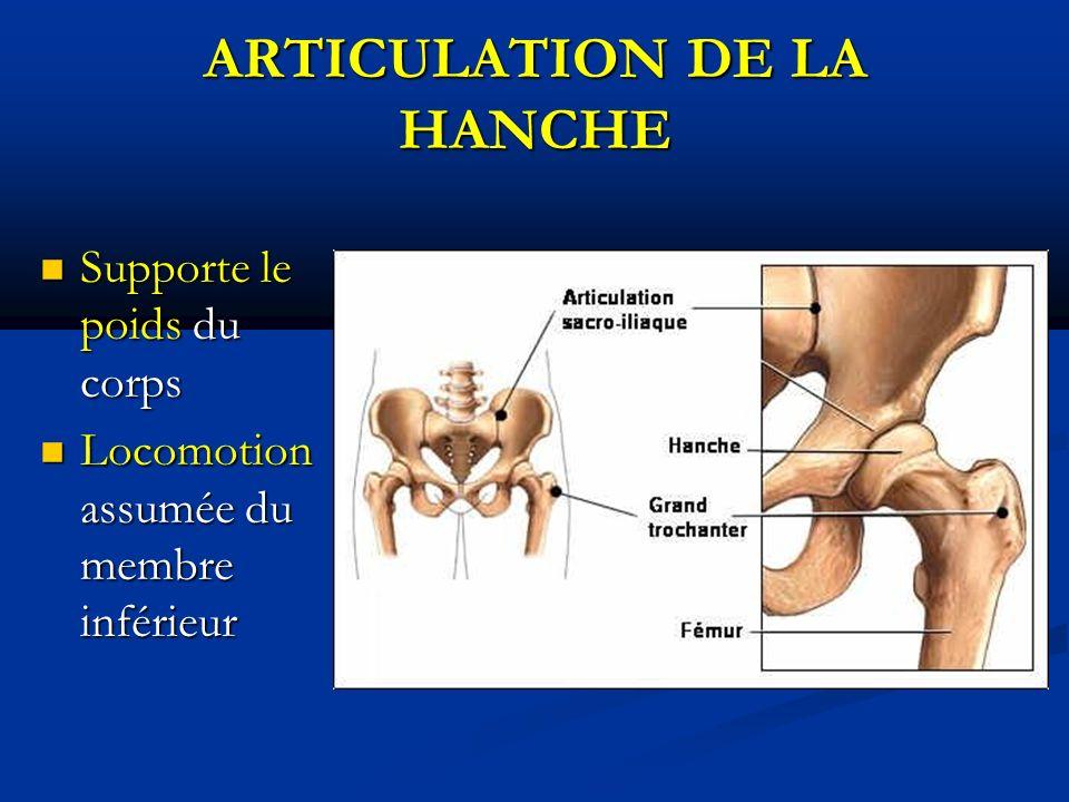 ARTICULATION DE LA HANCHE Supporte le poids du corps Supporte le poids du corps Locomotion assumée du membre inférieur Locomotion assumée du membre inférieur