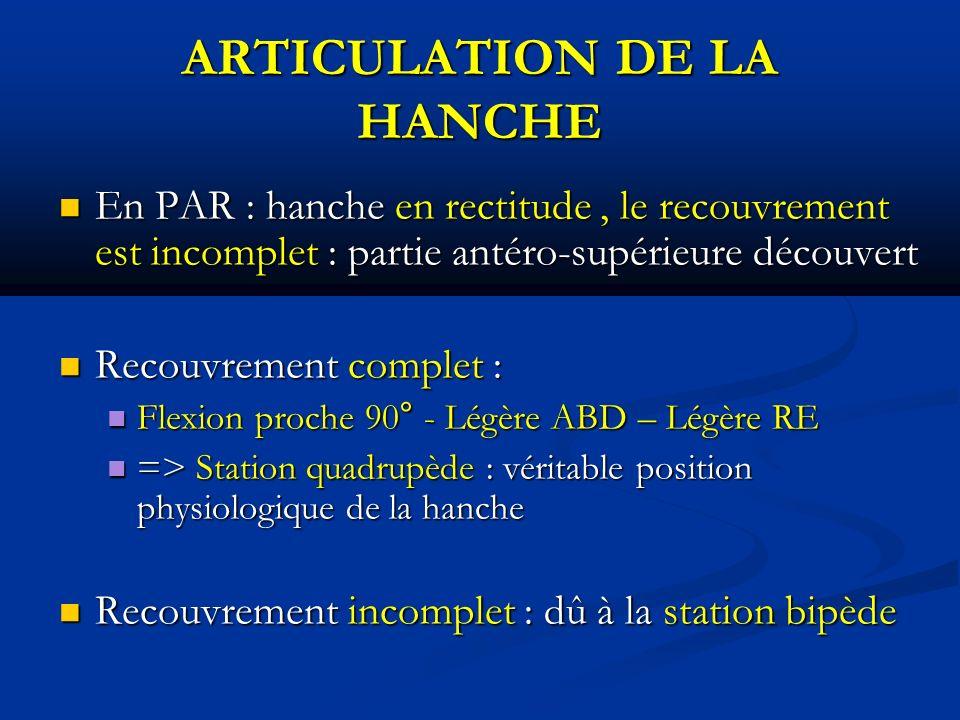 ARTICULATION DE LA HANCHE En PAR : hanche en rectitude, le recouvrement est incomplet : partie antéro-supérieure découvert En PAR : hanche en rectitude, le recouvrement est incomplet : partie antéro-supérieure découvert Recouvrement complet : Recouvrement complet : Flexion proche 90° - Légère ABD – Légère RE Flexion proche 90° - Légère ABD – Légère RE => Station quadrupède : véritable position physiologique de la hanche => Station quadrupède : véritable position physiologique de la hanche Recouvrement incomplet : dû à la station bipède Recouvrement incomplet : dû à la station bipède