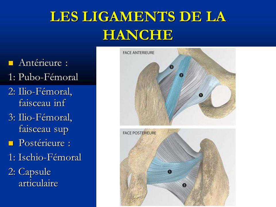 Antérieure : Antérieure : 1: Pubo-Fémoral 2: Ilio-Fémoral, faisceau inf 3: Ilio-Fémoral, faisceau sup Postérieure : Postérieure : 1: Ischio-Fémoral 2: Capsule articulaire