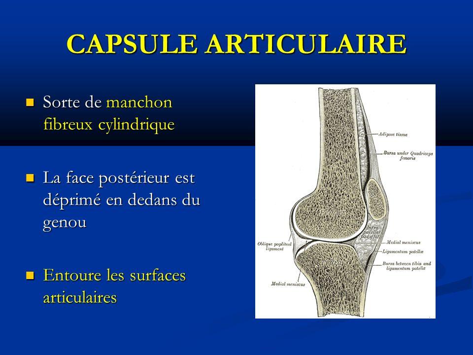 CAPSULE ARTICULAIRE Sorte de manchon fibreux cylindrique Sorte de manchon fibreux cylindrique La face postérieur est déprimé en dedans du genou La face postérieur est déprimé en dedans du genou Entoure les surfaces articulaires Entoure les surfaces articulaires