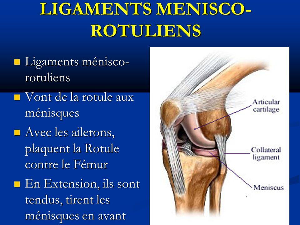 Ligaments ménisco- rotuliens Ligaments ménisco- rotuliens Vont de la rotule aux ménisques Vont de la rotule aux ménisques Avec les ailerons, plaquent la Rotule contre le Fémur Avec les ailerons, plaquent la Rotule contre le Fémur En Extension, ils sont tendus, tirent les ménisques en avant En Extension, ils sont tendus, tirent les ménisques en avant LIGAMENTS MENISCO- ROTULIENS