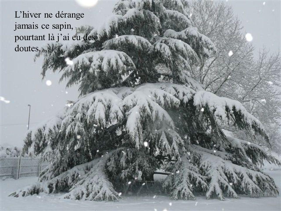 19 décembre: 15cm retombés en à peine 6h ce qui augmente la couche de neige à son maximum: 45cm !!! On décide de refaire une nouvelle ballade un peu p