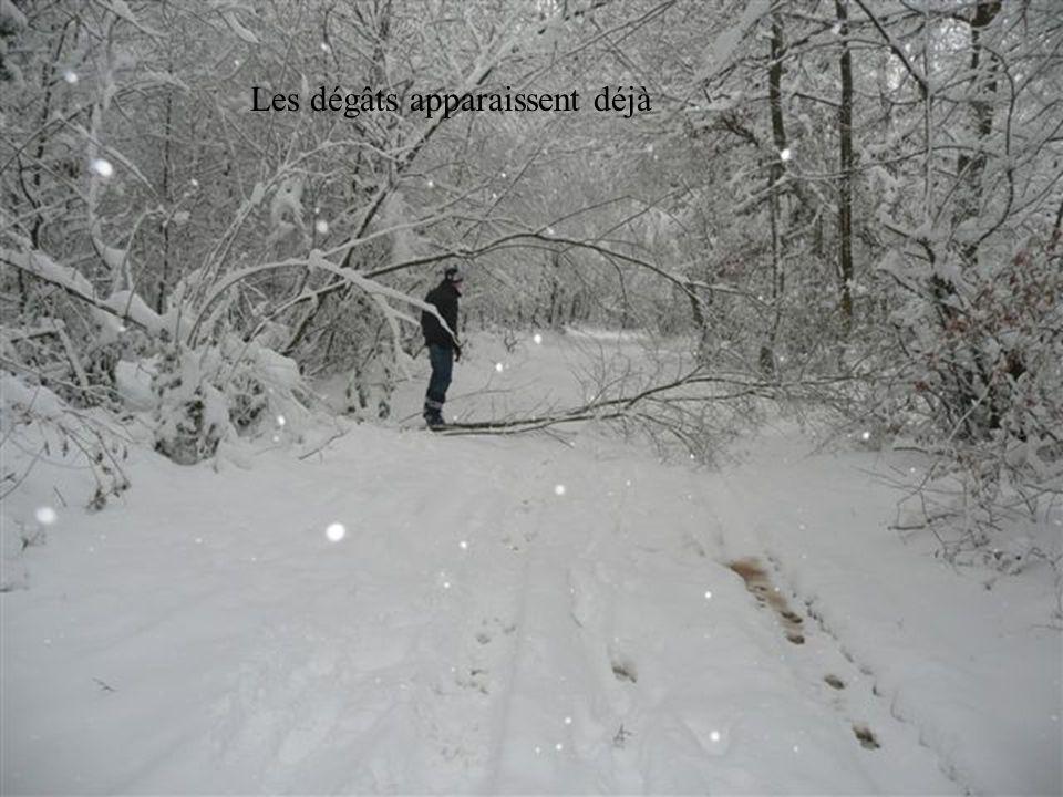 Retour dans la forêt sous une neige modérée-forte :o