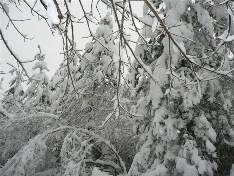 Euh….là ça devient vraiment compliqué… Cest également à cet instant quon commençais à recevoir des boules de neiges par les arbres alourdis ; plutôt m