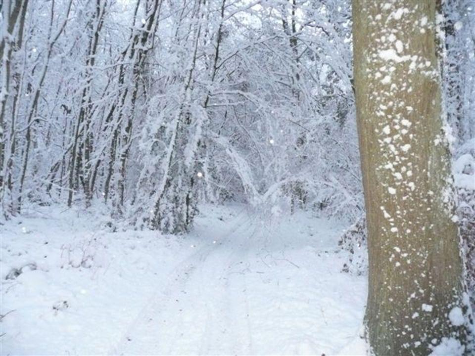 Cest repartit pour un petit tour en forêt !