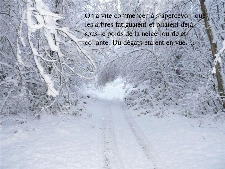 On a vite commencer à sapercevoir que les arbres fatiguaient et pliaient déjà sous le poids de la neige lourde et collante.