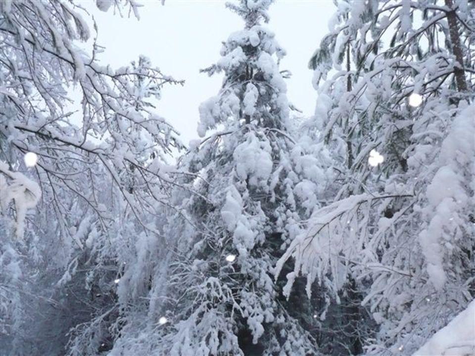 On a vite commencer à sapercevoir que les arbres fatiguaient et pliaient déjà sous le poids de la neige lourde et collante. Du dégâts étaient en vue….