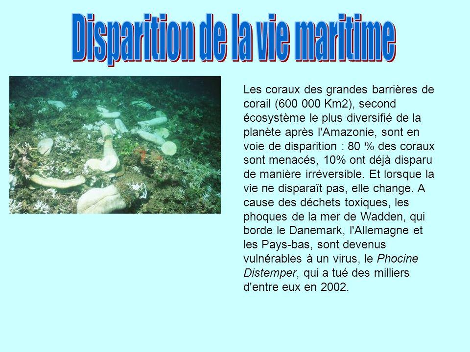 Les coraux des grandes barrières de corail (600 000 Km2), second écosystème le plus diversifié de la planète après l'Amazonie, sont en voie de dispari
