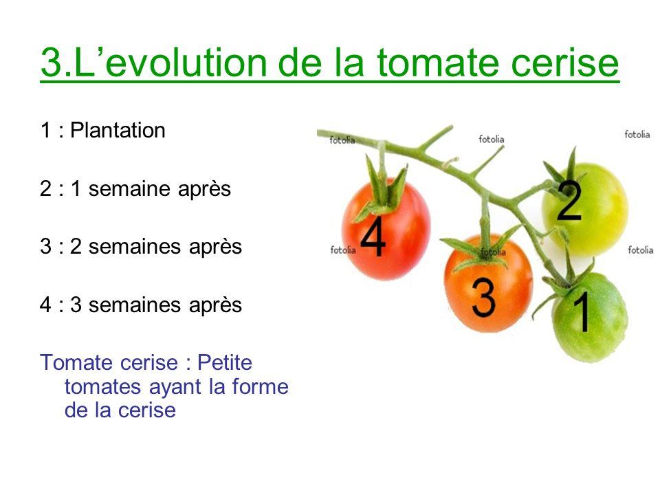 3.Levolution de la tomate cerise 1 : Plantation 2 : 1 semaine après 3 : 2 semaines après 4 : 3 semaines après Tomate cerise : Petite tomates ayant la forme de la cerise