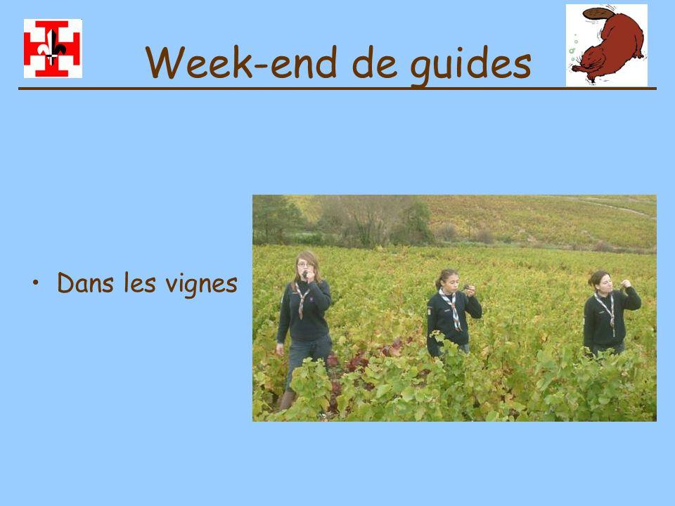 Week-end de guides Dans les vignes
