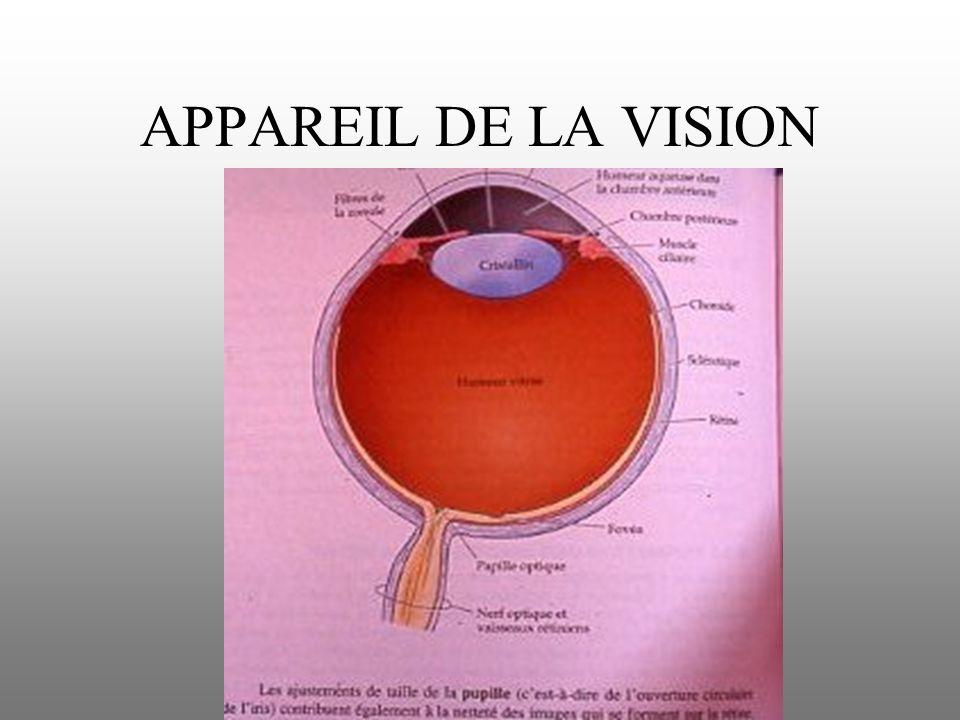 APPAREIL DE LA VISION