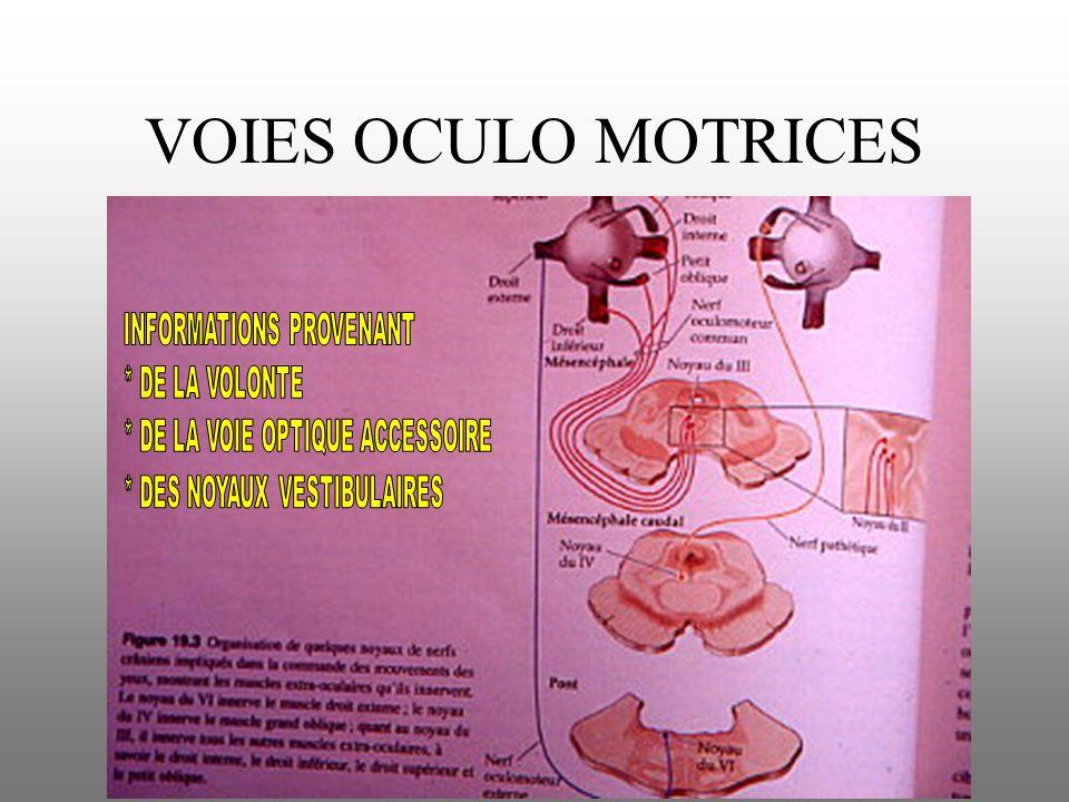 VOIES OCULO MOTRICES