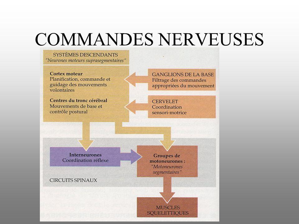 COMMANDES NERVEUSES