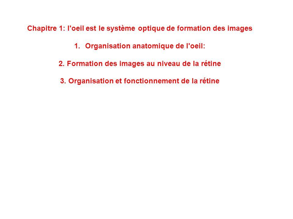 Chapitre 1: l'oeil est le système optique de formation des images 1.Organisation anatomique de l'oeil: 2. Formation des images au niveau de la rétine