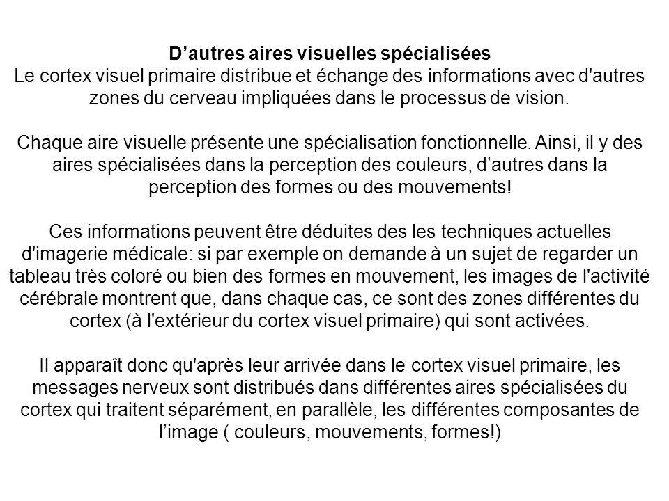 Dautres aires visuelles spécialisées Le cortex visuel primaire distribue et échange des informations avec d'autres zones du cerveau impliquées dans le