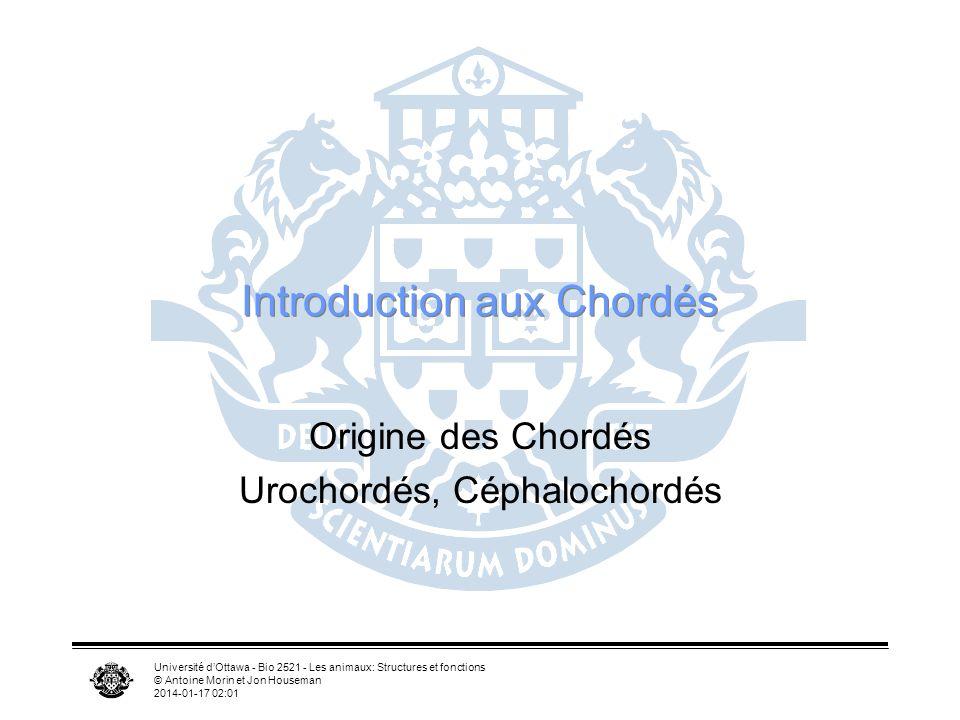 Université dOttawa - Bio 2521 - Les animaux: Structures et fonctions © Antoine Morin et Jon Houseman 2014-01-17 02:03 Introduction aux Chordés Origine
