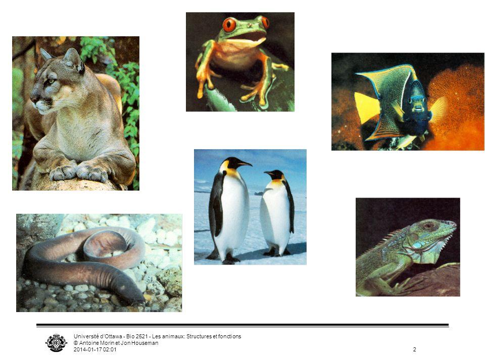 Université dOttawa - Bio 2521 - Les animaux: Structures et fonctions © Antoine Morin et Jon Houseman 2014-01-17 02:0333 Système respiratoire coeur ventral, 2-4 chambres globules rouges (érythrocytes)
