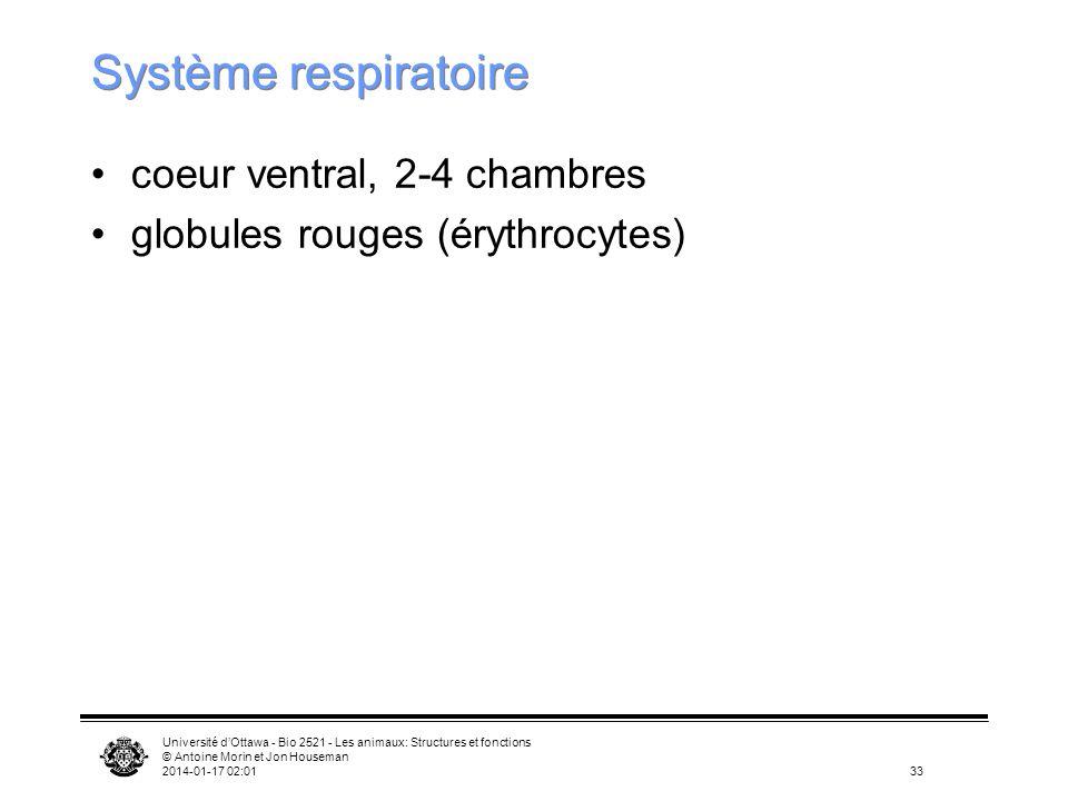 Université dOttawa - Bio 2521 - Les animaux: Structures et fonctions © Antoine Morin et Jon Houseman 2014-01-17 02:0333 Système respiratoire coeur ven