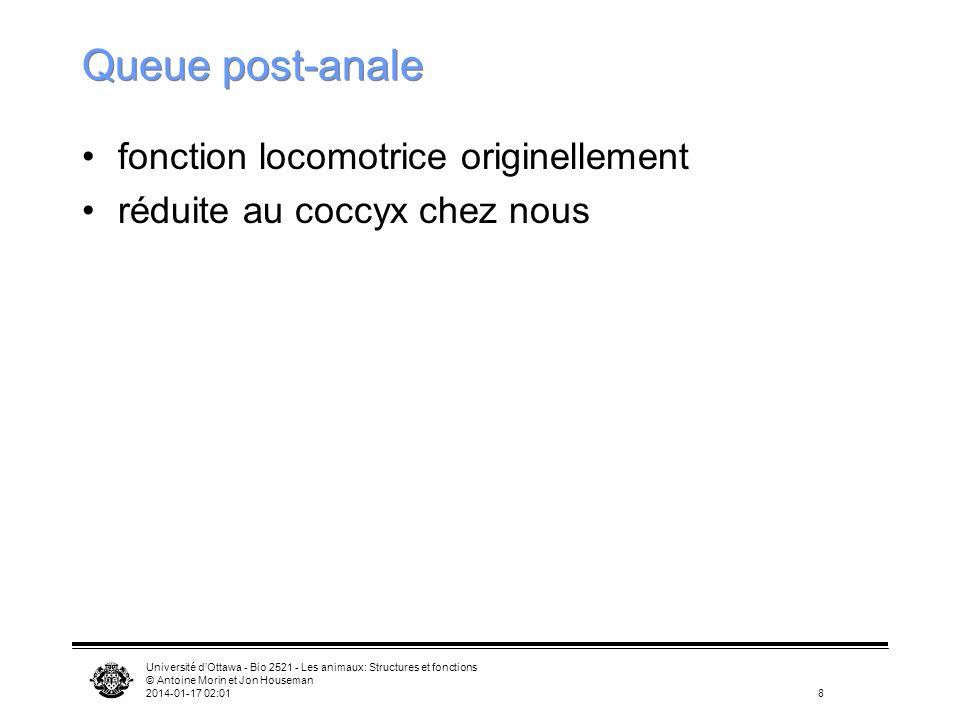 Université dOttawa - Bio 2521 - Les animaux: Structures et fonctions © Antoine Morin et Jon Houseman 2014-01-17 02:038 Queue post-anale fonction locom