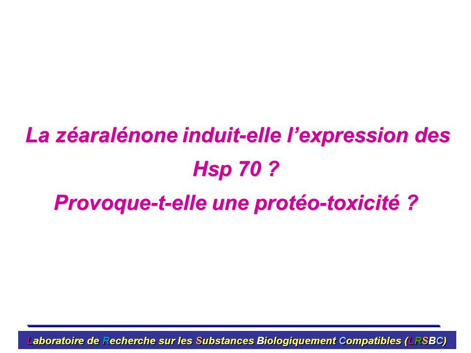 La zéaralénone induit-elle lexpression des Hsp 70 ? La zéaralénone induit-elle lexpression des Hsp 70 ? Provoque-t-elle une protéo-toxicité ? Laborato
