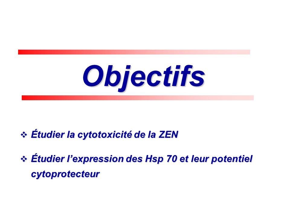 Objectifs Étudier la cytotoxicité de la ZEN Étudier la cytotoxicité de la ZEN Étudier lexpression des Hsp 70 et leur potentiel cytoprotecteur Étudier