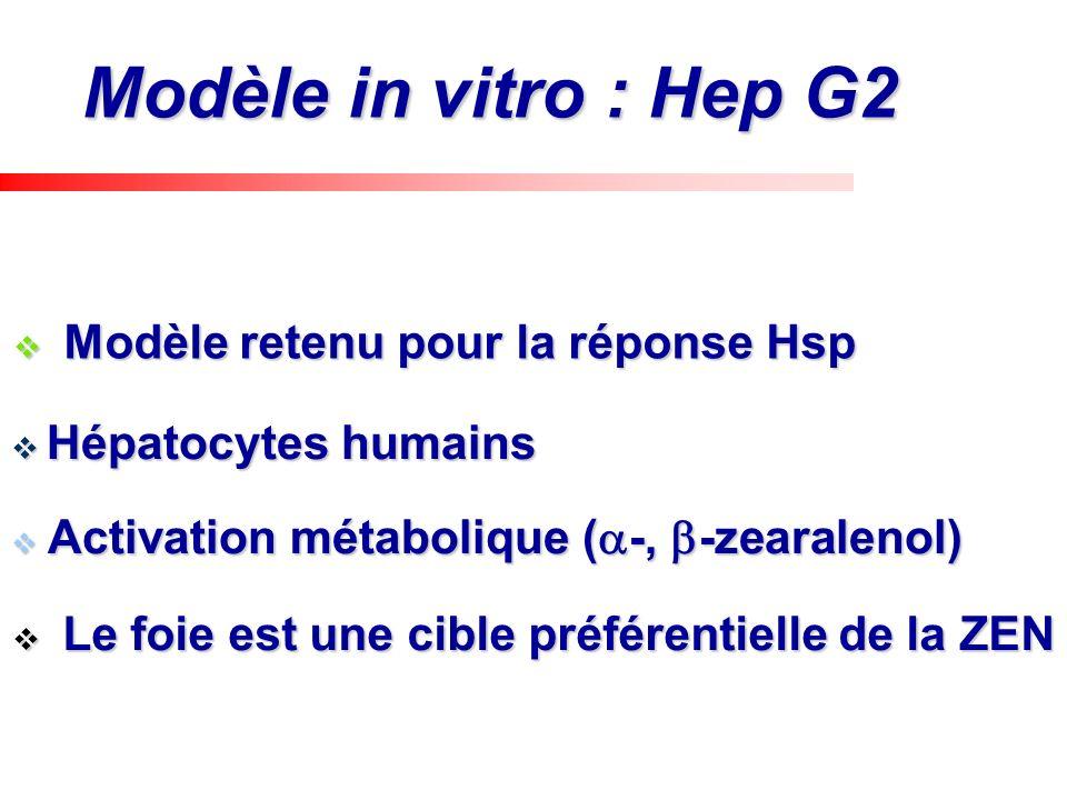 Modèle in vitro : Hep G2 Le foie est une cible préférentielle de la ZEN Le foie est une cible préférentielle de la ZEN Activation métabolique ( -, -ze