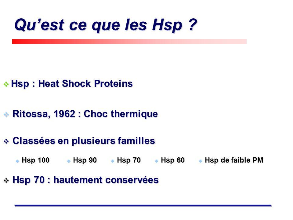 Quest ce que les Hsp ? Hsp : Heat Shock Proteins Hsp : Heat Shock Proteins Hsp 70 Hsp 90 Hsp 90 Hsp 100 Hsp 100 Classées en plusieurs familles Classée
