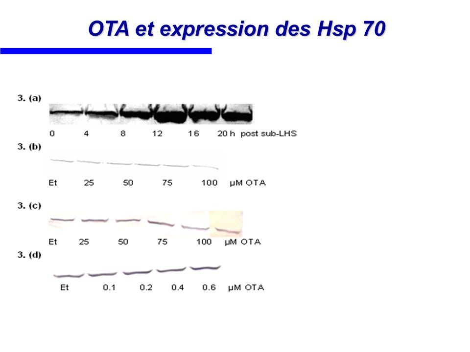OTA et expression des Hsp 70