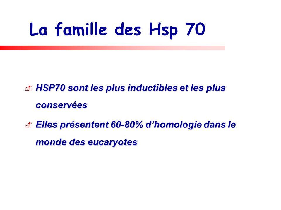 La famille des Hsp 70 HSP70 sont les plus inductibles et les plus conservées HSP70 sont les plus inductibles et les plus conservées Elles présentent 6