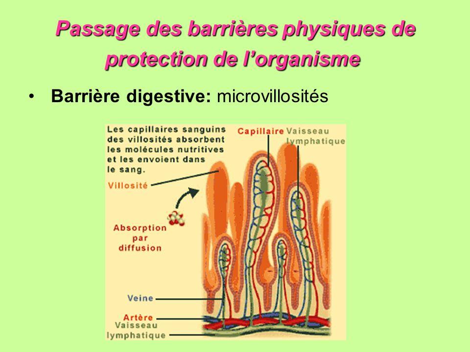 Passage des barrières physiques de protection de lorganisme Passage des barrières physiques de protection de lorganisme Barrière digestive: microvillo