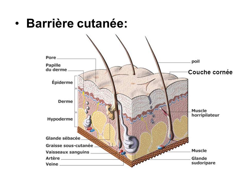 Barrière cutanée: Couche cornée