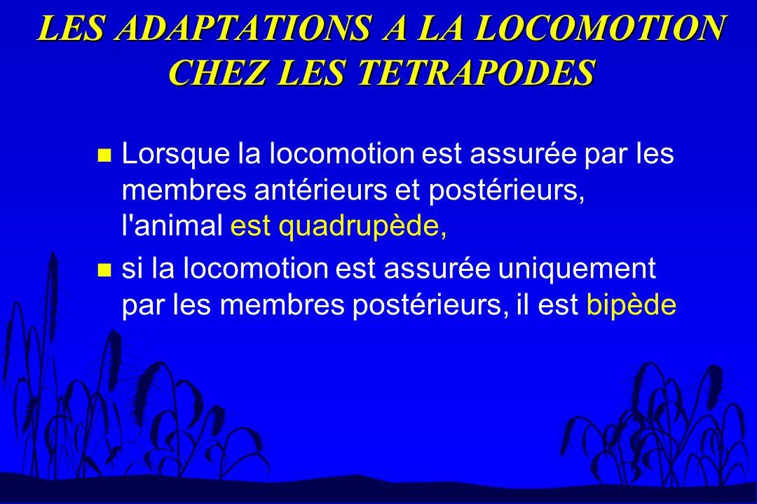 LES ADAPTATIONS A LA LOCOMOTION CHEZ LES TETRAPODES n Lorsque la locomotion est assurée par les membres antérieurs et postérieurs, l'animal est quadru