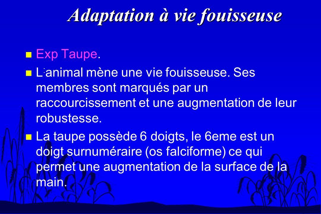 Adaptation à vie fouisseuse n Exp Taupe. n L : animal mène une vie fouisseuse. Ses membres sont marqués par un raccourcissement et une augmentation de