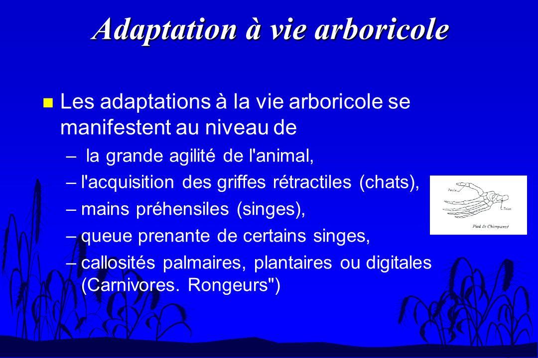 Adaptation à vie arboricole n Les adaptations à la vie arboricole se manifestent au niveau de – la grande agilité de l'animal, –l'acquisition des grif